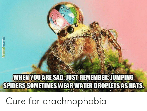 hats: WHEN YOUARE SAD JUST REMEMBER JUMPING  SPIDERS SOMETIMES WEAR WATER DROPLETS AS HATS  Animalmemes Cure for arachnophobia