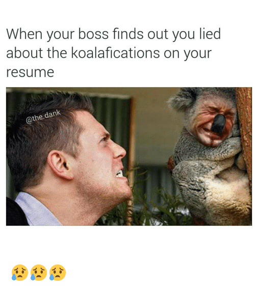 When Your Boss Finds Out You Lied About The Koalafications On Your