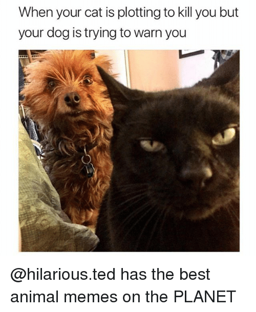 Best Animal Memes: When your cat is plotting to kill you but  your dog is trying to warn you @hilarious.ted has the best animal memes on the PLANET