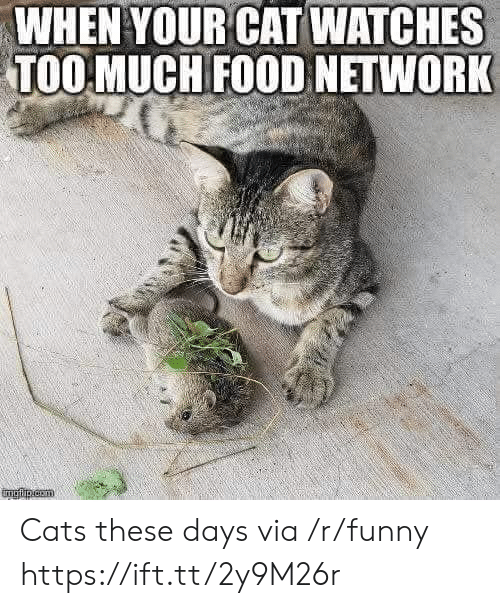 Food Network: WHEN YOUR CAT WATCHES  TOO MUCH FOOD NETWORK Cats these days  via /r/funny https://ift.tt/2y9M26r