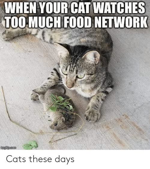 Food Network: WHEN YOUR CAT WATCHES  TOO MUCH FOOD NETWORK Cats these days