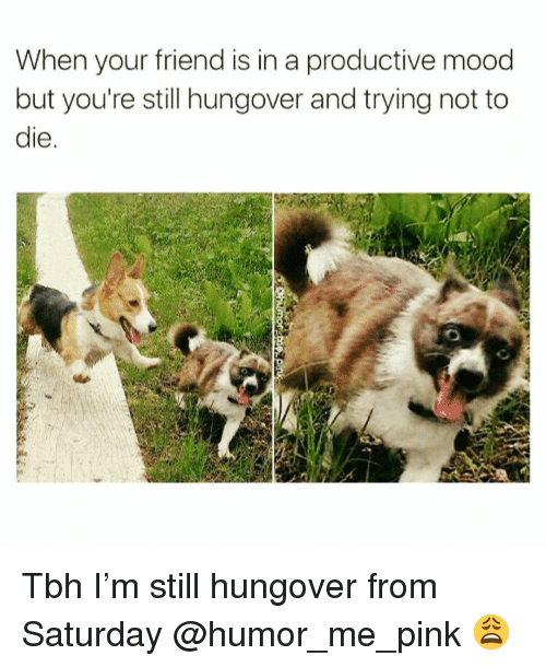 Funny, Mood, and Tbh: When your friend is in a productive mood  but you're still hungover and trying not to  le Tbh I'm still hungover from Saturday @humor_me_pink 😩