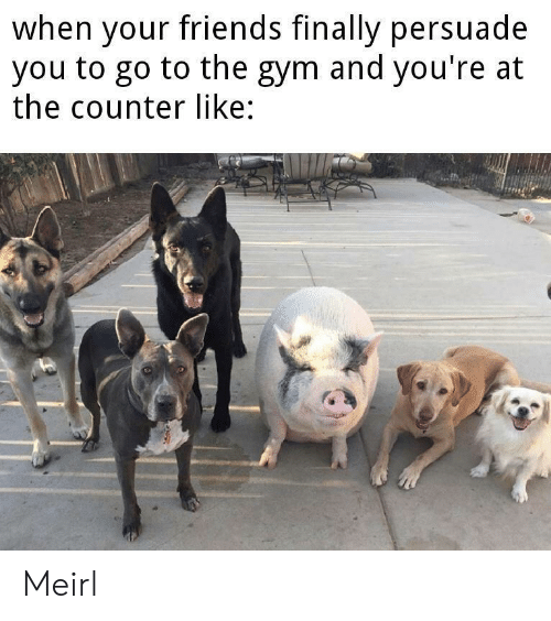 Friends, Gym, and MeIRL: when your friends finally persuade  you to go to the gym and you're at  the counter like: Meirl