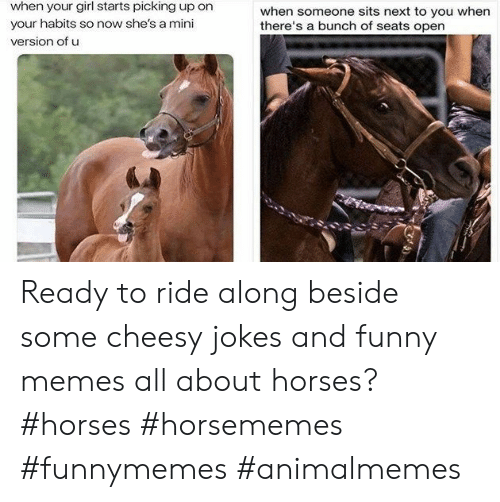 And Funny: when your girl starts picking up on  when someone sits next to you when  there's a bunch of seats open  your habits so now she's a mini  version of u Ready to ride along beside some cheesy jokes and funny memes all about horses?#horses #horsememes #funnymemes #animalmemes