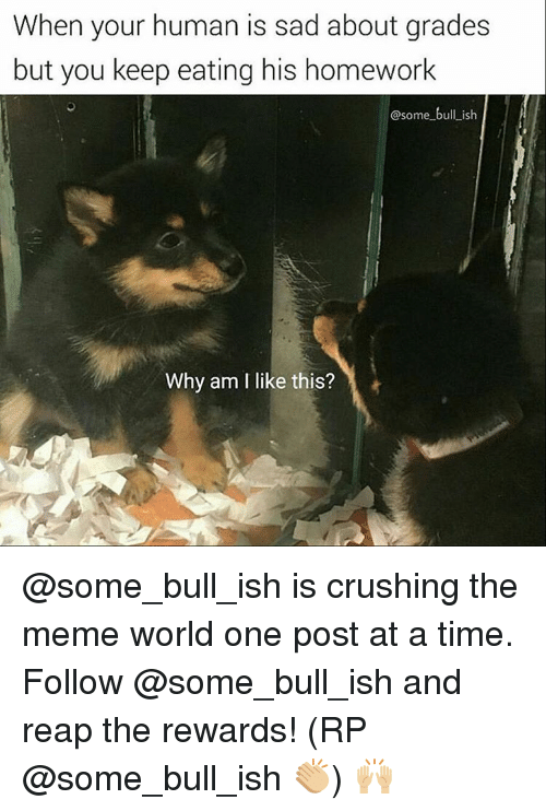 Meme World: When your human is sad about grades  but you keep eating his homework  @some bull ish  Why am I like this? @some_bull_ish is crushing the meme world one post at a time. Follow @some_bull_ish and reap the rewards! (RP @some_bull_ish 👏🏼) 🙌🏼