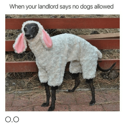 Dogs, O_o, and  No: When your landlord says no dogs allowed O.O
