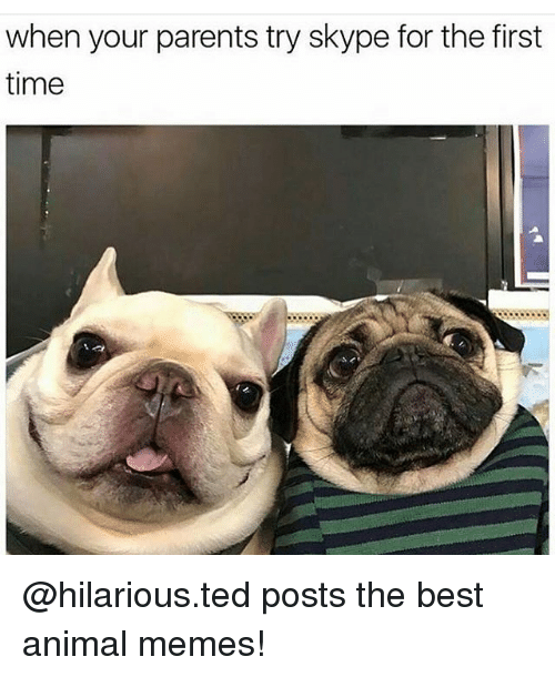 Animal Meme: when your parents try skype for the first  time @hilarious.ted posts the best animal memes!