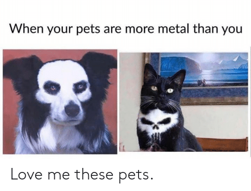 Dank, Love, and Pets: When your pets are more metal than you Love me these pets.