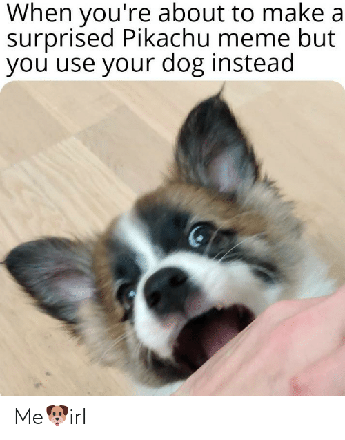 Meme, Pikachu, and Irl: When you're about to make a  surprised Pikachu meme but  you use your dog instead Me🐶irl