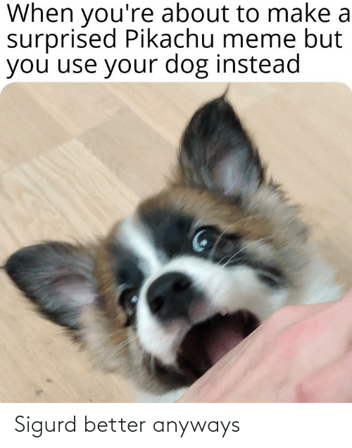 Pikachu Meme: When you're about to make a  surprised Pikachu meme but  you use your dog instead Sigurd better anyways
