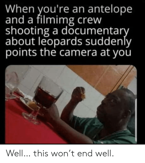 Camera, Crew, and You: When you're an antelope  and a filmimg crew  shooting a documentary  about leopards suddenly  points the camera at you Well… this won't end well.