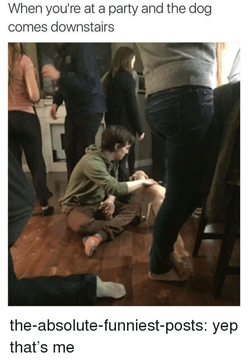 Party, Target, and Tumblr: When you're at a party and the dog  comes downstairs the-absolute-funniest-posts: yep that's me