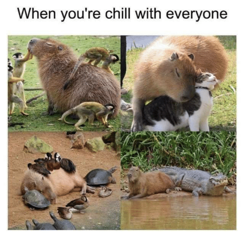 Chill, Youre, and Everyone: When you're chill with everyone