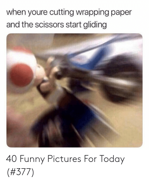 Pictures For: when youre cutting wrapping paper  and the scissors start gliding 40 Funny Pictures For Today (#377)