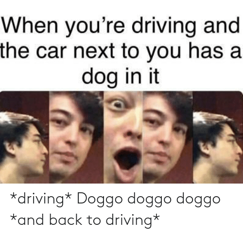 Driving: When you're driving and  the car next to you has a  dog in it *driving* Doggo doggo doggo *and back to driving*