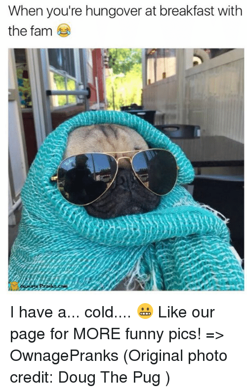 Have A Cold: When you're hungover at breakfast with  the fam I have a... cold.... 😬  Like our page for MORE funny pics! => OwnagePranks  (Original photo credit: Doug The Pug )
