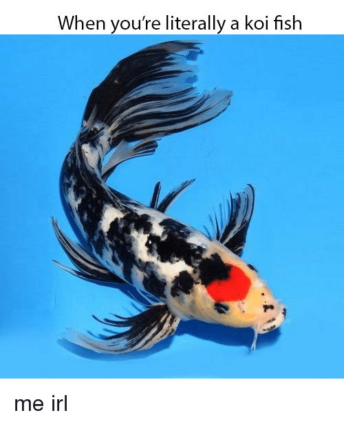 Fish, Irl, and Me IRL: When you're literally a koi fish