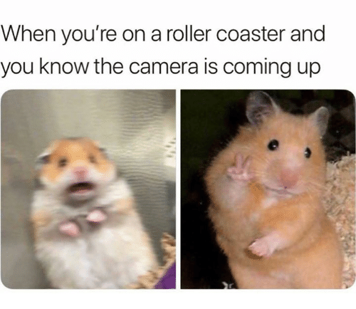 Camera, Roller Coaster, and You: When you're on a roller coaster and  you know the camera is coming up