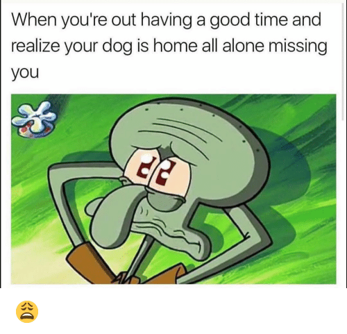 Being Alone, Funny, and Good: When you're out having a good time and  realize your dog is home all alone missing  you 😩