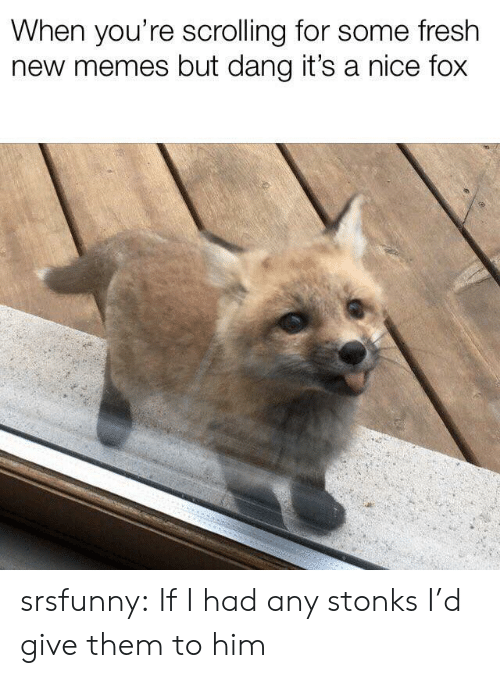 Fresh, Memes, and Tumblr: When you're scrolling for some fresh  new memes but dang it's a nice fox srsfunny:  If I had any stonks I'd give them to him