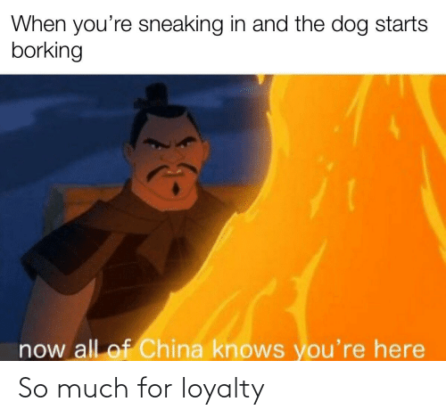 Now All Of China Knows Youre Here: When you're sneaking in and the dog starts  borking  now all of China knows you're here So much for loyalty