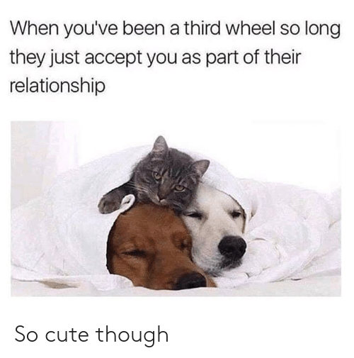 Cute, Dank, and Been: When you've been a third wheel so long  they just accept you as part of their  relationship So cute though