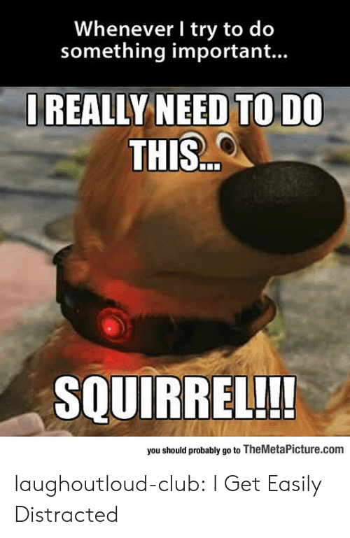 Club, Tumblr, and Blog: Whenever I try to do  something important...  IREALLY NEED TO DO  THIS..  SQUIRREL!!  you should probably go to TheMetaPicture.com laughoutloud-club:  I Get Easily Distracted