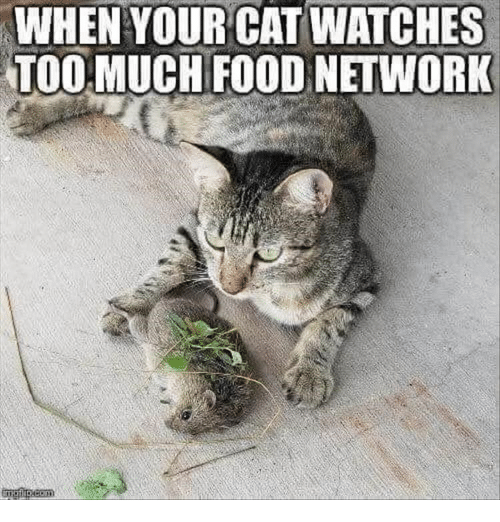 Food Network: WHENYOUR CAT WATCHES  TOO MUCH FOOD NETWORK