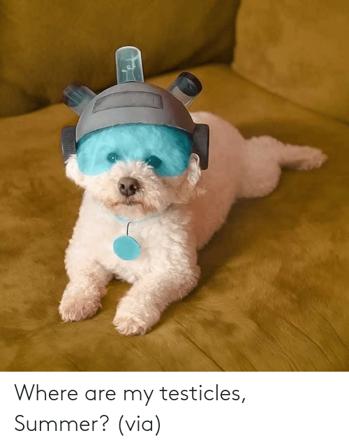 Summer: Where are my testicles, Summer?(via)