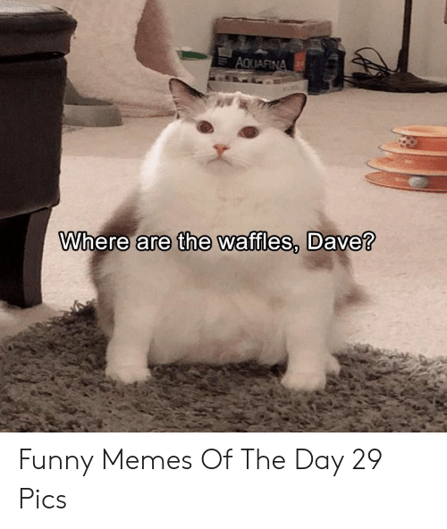 waffles: Where are the waffles, Dave? Funny Memes Of The Day 29 Pics