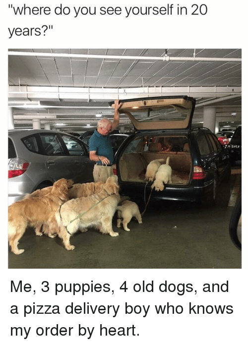 """Dogs, Memes, and Pizza: """"where do you see yourself in 20  years?"""" Me, 3 puppies, 4 old dogs, and a pizza delivery boy who knows my order by heart."""
