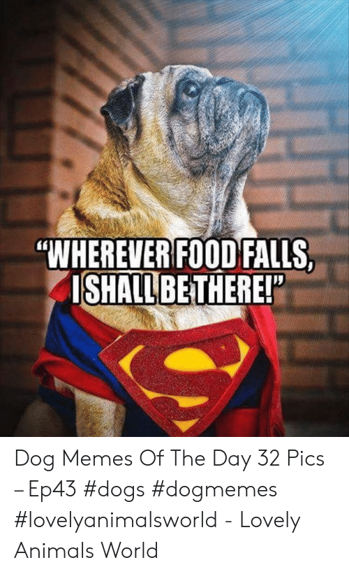 """Animals, Dogs, and Food: """"WHEREVER FOOD FALLS,  ISHALL BETHERE! Dog Memes Of The Day 32 Pics – Ep43 #dogs #dogmemes #lovelyanimalsworld - Lovely Animals World"""