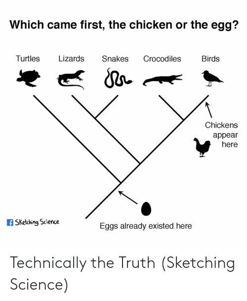Chickens: Which came first, the chicken or the egg?  Turtles  Lizards  Snakes  Crocodiles  Birds  Chickens  appear  here  A Sketching Science  Eggs already existed here Technically the Truth (Sketching Science)