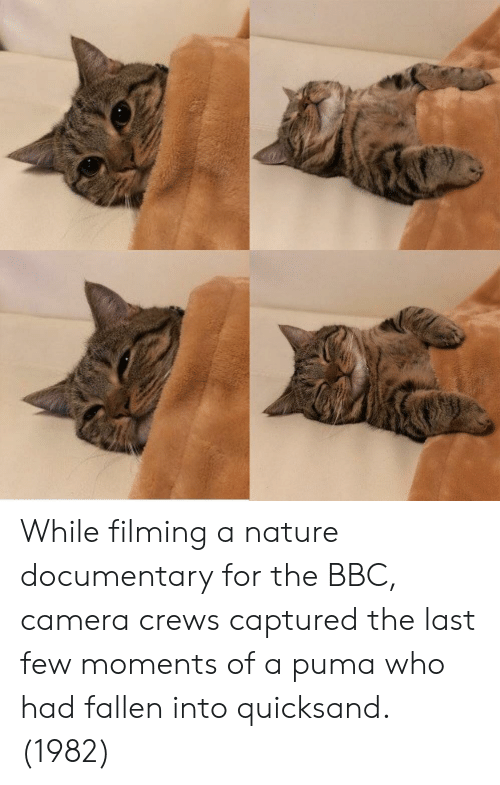 Puma: While filming a nature documentary for the BBC, camera crews captured the last few moments of a puma who had fallen into quicksand. (1982)