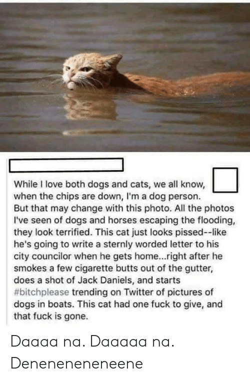 Boats: While I love both dogs and cats, we all know,  when the chips are down, I'm a dog person.  But that may change with this photo. All the photos  I've seen of dogs and horses escaping the flooding,  they look terrified. This cat just looks pissed--like  he's going to write a sternly worded letter to his  city councilor when he gets home...right after he  smokes a few cigarette butts out of the gutter,  does a shot of Jack Daniels, and starts  #bitchplease trending on Twitter of pictures of  dogs in boats. This cat had one fuck to give, and  that fuck is gone. Daaaa na. Daaaaa na. Deneneneneneene