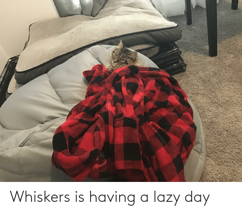 Lazy: Whiskers is having a lazy day