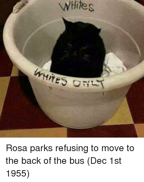 Rosa Parks: WHite s Rosa parks refusing to move to the back of the bus (Dec 1st 1955)