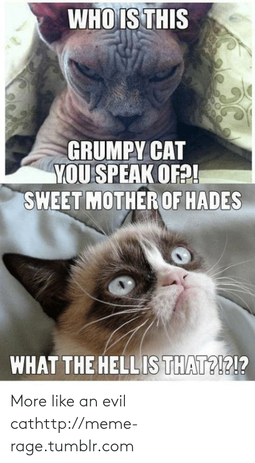 Mother Of Hades: WHO IS THIS  GRUMPY CAT  YOU SPEAK OF?!  SWEET MOTHER OF HADES  WHAT THE HELLIS THAT?!?!? More like an evil cathttp://meme-rage.tumblr.com