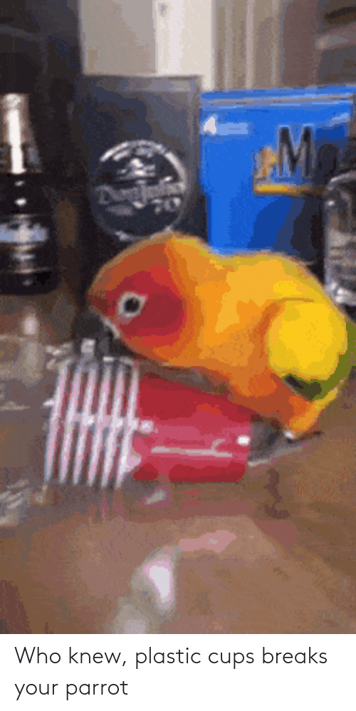 knew: Who knew, plastic cups breaks your parrot