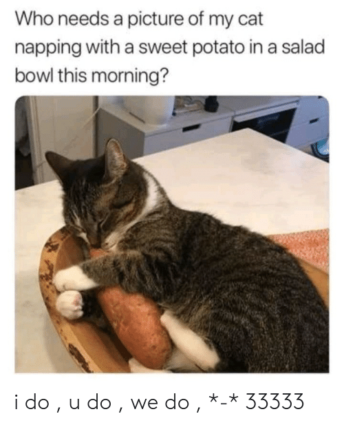 napping: Who needs a picture of my cat  napping with a sweet potato in a salad  bowl this morning? i do , u do , we do , *-* 33333