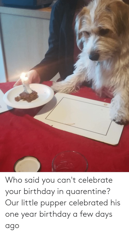 Celebrated: Who said you can't celebrate your birthday in quarentine? Our little pupper celebrated his one year birthday a few days ago