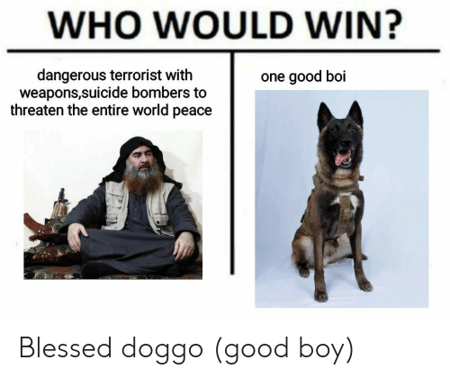 Who Would Win: WHO WOULD WIN?  dangerous terrorist with  weapons,suicide bombers to  threaten the entire world peace  one good boi Blessed doggo (good boy)
