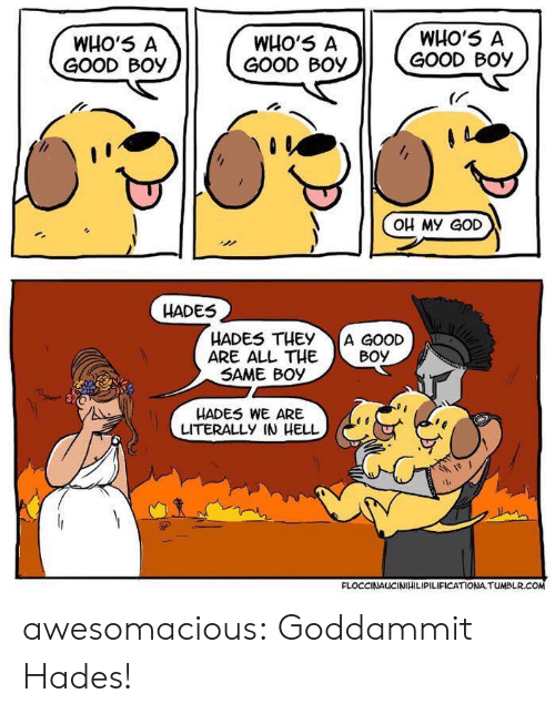 God, Oh My God, and Tumblr: WHO'5 A  GOOD Boy  WHO'5 A  GOOD Boy  WHO'5 A  GOOD BOy  (r  OH My GoD  HADES  HADES THEY A GOOD  ARE ALL THEBoy  SAME BOy  HADES WE ARE  LITERALLY IN HELL  FLOCCINAUCINIHILIPILIFICATIONA TUMBLR awesomacious:  Goddammit Hades!