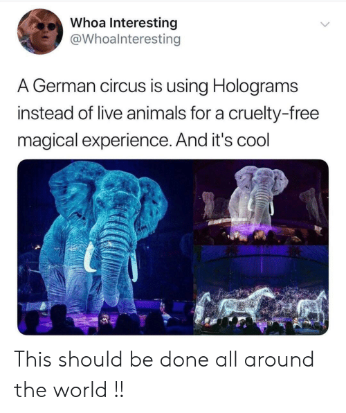 Animals, Cool, and Free: Whoa Interesting  @Whoalnteresting  A German circus is using Holograms  instead of live animals for a cruelty-free  magical experience. And it's cool This should be done all around the world !!