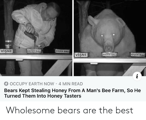 Wholesome: Wholesome bears are the best