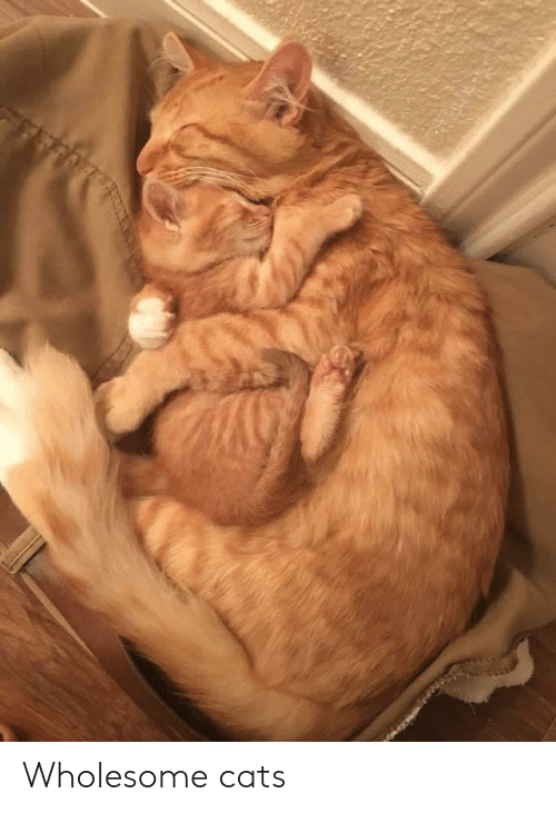 Cats and Wholesome: Wholesome cats