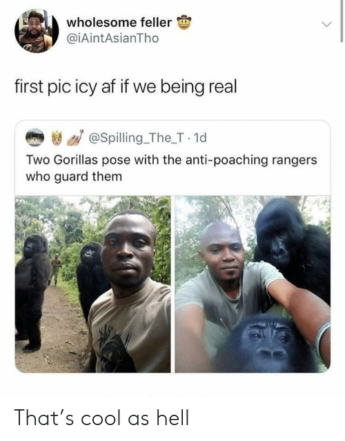 Being Real: wholesome feller  @iAintAsianTho  first pic icy af if we being real  き / @spilling_The_T 1d  Two Gorillas pose with the anti-poaching rangers  who guard them That's cool as hell