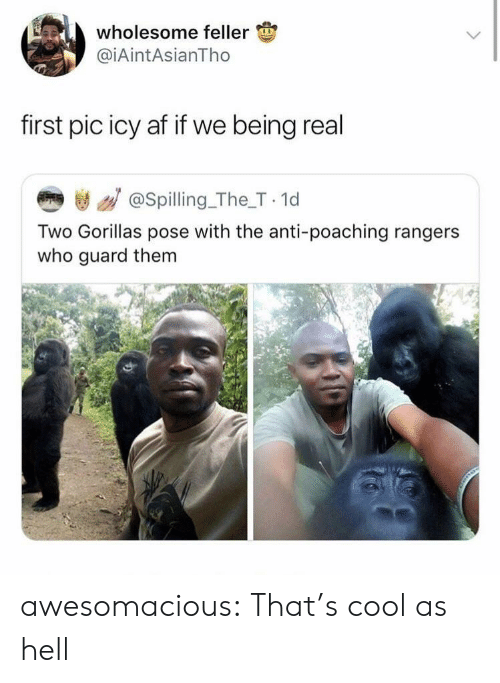 Being Real: wholesome feller  @iAintAsianTho  first pic icy af if we being real  き / @spilling_The_T 1d  Two Gorillas pose with the anti-poaching rangers  who guard them awesomacious:  That's cool as hell