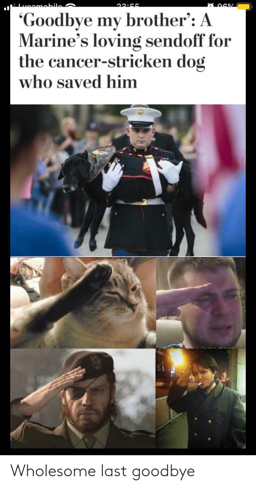 Wholesome: Wholesome last goodbye