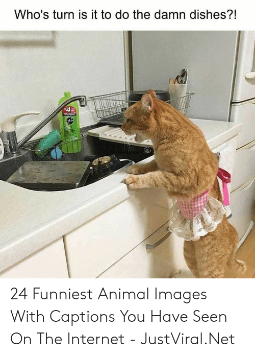 Captions: Who's turn is it to do the damn dishes?!  4 24 Funniest Animal Images With Captions You Have Seen On The Internet - JustViral.Net
